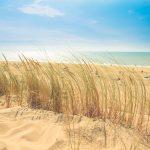 beach dune holiday 9537